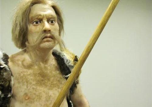 hominiden2