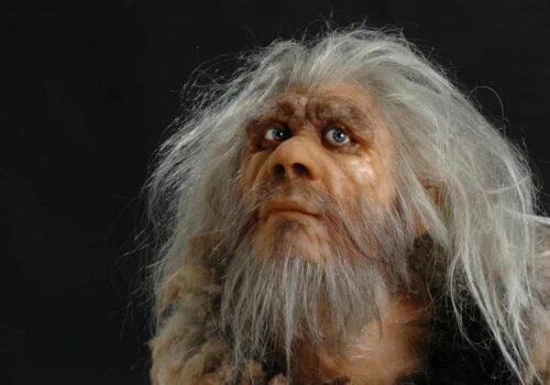 hominiden4