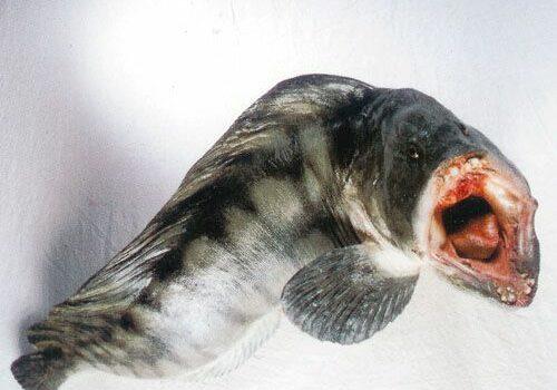 vissen13