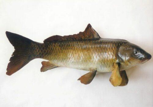 vissen9